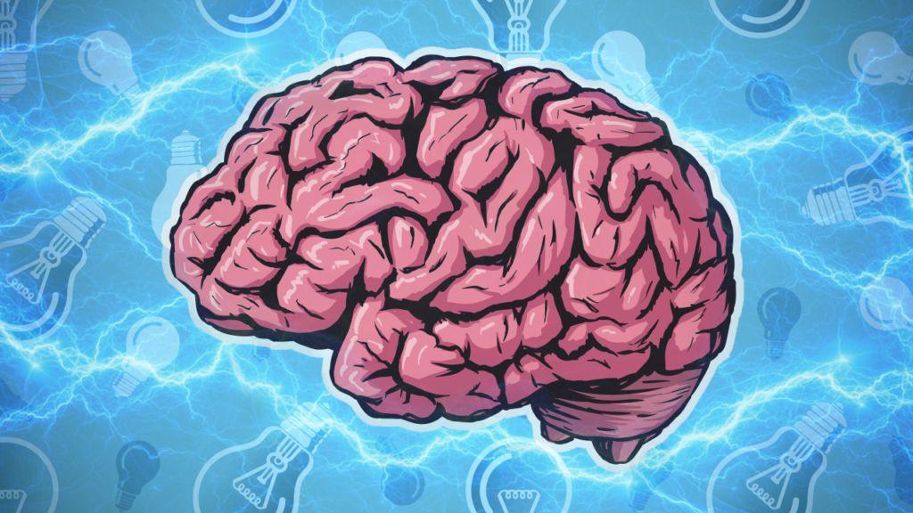 картинка с мозгами и надписью мозги строения